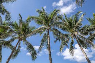 S1920D - Silver, Richard - Palawan Palm Trees I