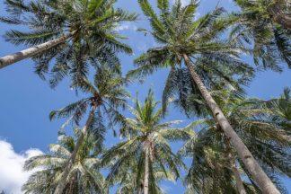 S1921D - Silver, Richard - Palawan Palm Trees II