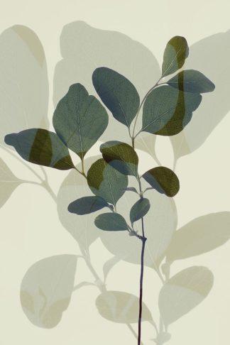 W1169D - Winstanley, Ian - Green Leaves 7