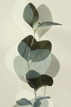 W1170D - Winstanley, Ian - Green Leaves 8
