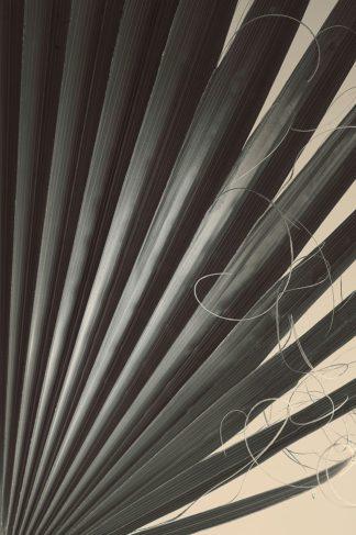 W1177D - Winstanley, Ian - Fan Palm Detail 2