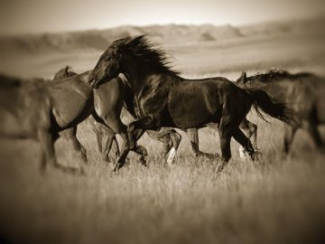 L970D - Leacock, J.C. - Dark Horse