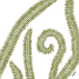 S1929D - Sierer, Trish - Curly Fern