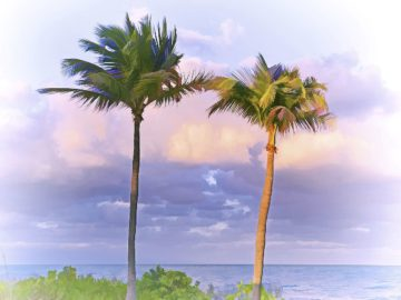 R1451D - Reed, Jack - Two Palms