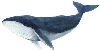 S1944D - Saylor, Jeannine - Humpback Whale - Blue