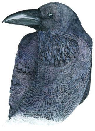 S1948D - Saylor, Jeannine - Raven