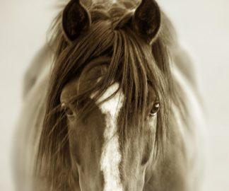 D2077D - Dearing, Lisa - Ghost Horse