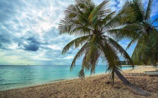D2085D - Davis, Lizzy - Palm Tree Dreams