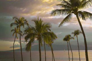 V782D - Vargas, Carlos - Hawaii Palm Sunset No. 1