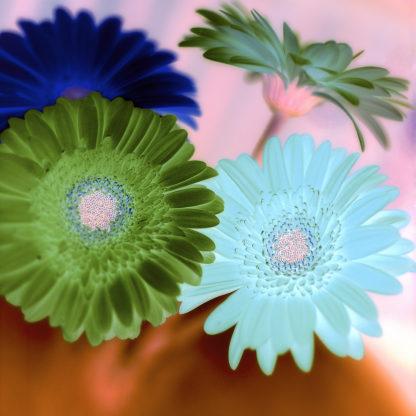 Floral Color #2