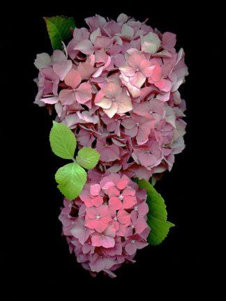 Floral Color #29