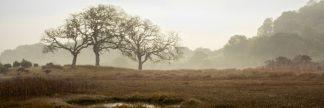 Oak Tree #64