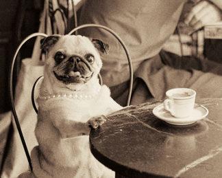Café Pug