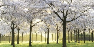 Bridal Trees